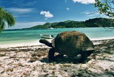 Seychelles - Offres spéciales , promotions, Mahé Island , Praslin Island, La Digue Island, Frégate Island, Silhouette Island, North Island, Cousine Island, Denis Island, Desroches Island, Labriz Silhouette, Round Island, Cerf Island, Brid Island