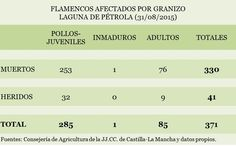 Datos de los flamencos afectados por el pedrisco caído en la Laguna de Pétrola el 31 de agosto de 2015. Datos a fecha 5 de septiembre de 2015.