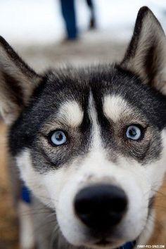 #Husky look
