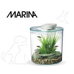 El acuario 360 grados de Marina es un innovador acuario para peces de escritorio con muchas características funcionales diseñadas para hacer la instalación y el mantenimiento lo más fácil posible. Perfecto para iniciarse de manera fácil y divertida en el mundo de la acuariofilia. Capacidad: 10 litros www.bestforpets.cl