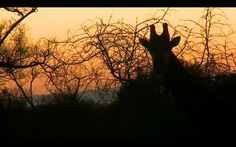 Safari live sunset-thanks WE!