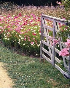 Cosmos and wood gate