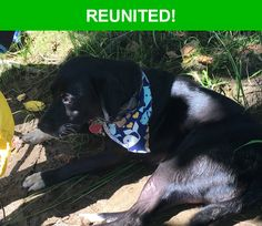 Great news! Happy to report that Lil has been reunited and is now home safe and sound! :)