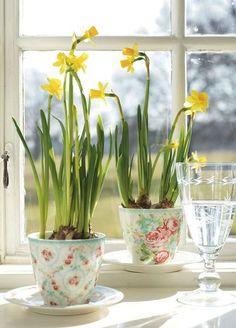 Daffodils on the windowsill