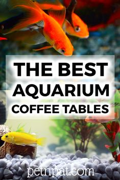 A fish tank coffee table will immediately get your guests talking. Aquarium coffee tables are wow-inducing tanks that are a lot of fun. Animals For Kids, Animals And Pets, Farm Animals, Animal Quotes, Animal Memes, Aquarium Design, Aquarium Ideas, Fish Tank Coffee Table, Aquarium Fish Tank