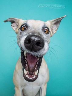 Além de fofos, esses cães são ótimos atores na hora de fazer essas expressões.
