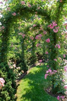 Flowers and Gardens - Tunnel of roses