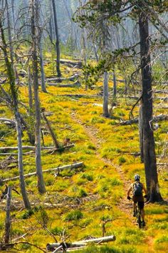 "Much of the length of The Divide Trail travels through old forest burns."" Trail: Divide to Twin Creek, North Fork, Idaho."