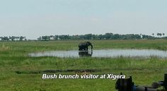 Guests at Xigera were treated to a special visitor at their bush brunch site yesterday via GIPHY