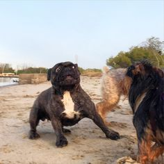 dog イヌ 犬可愛い画像まとめ http://ift.tt/27HcvU6
