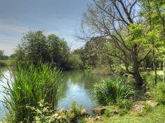 Parc Nord - Étangs municipaux aux Ulis - Plantes aquatiques