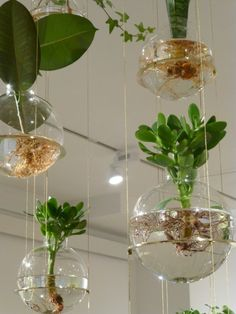 Hydroponic Gardening Ideas brilliant-indoor-water-garden-ideas - What if I say you can have a garden inside your home and that too a water garden? Well, these Brilliant Indoor Water Garden Ideas speak for themselves. Hanging Potted Plants, Diy Hanging Planter, Diy Planters, Hanging Baskets, Planter Ideas, Pot Plants, Indoor Succulents, Garden Planters, Indoor Water Garden