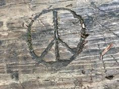 photo by Tracee Guynn-Leavell Make Peace, Peace And Love, Give Peace A Chance, Peace Signs, Finding Peace, Dreams, Pictures, Baby, Photos