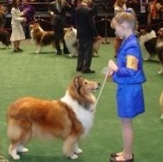 American Dog Shows & Events in the USA - State by State - Visit and add dog shows in your area Dog Competitions, Westminster Dog Show, American Dog, Norwich Terrier, Dog Photography, Lonely Planet, New York City, Corgi, Pets