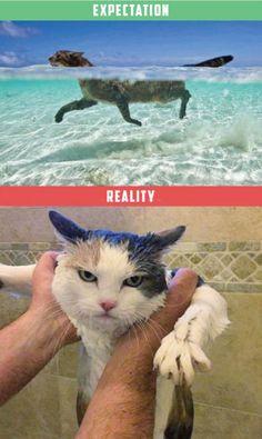 chat-vs-realite-1