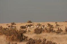 Come big game hunting at Chico Basin Ranch, Colorado. #BoxTCowboys