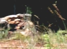 This image appears to be an Angel, captured by my Nikon 4600 digital camera on a clear, bright, sunny day on September 2008 at Gettysburg. Angel Sightings, Ghost Sightings, Ghost Images, Ghost Pictures, Gettysburg Ghosts, Haunted Happenings, Creepy Ghost, Afraid Of The Dark, You Are The Father