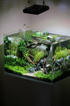 DIY fish tank decorations Themes Aquascaping, Fresh Water Decor Ideas, Small Aquascaping Homemade, Creative Aquascaping Cool Simple Ideas, Unique Aquascaping Home Made Living Room, Colorful fish tank Tropical, Rustic Aquascaping Cute Aquarium Goldfish, How To Make Cheap Aquascaping