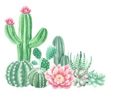 Clipart photos, royalty-free images, graphics, vectors & videos Watercolor Cactus and Succulents Cactus Drawing, Cactus Painting, Watercolor Cactus, Cactus Art, Watercolor Paintings, Cactus Flower, Watercolor Succulents, Painting Art, Buy Cactus