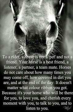 Cute Horses, Pretty Horses, Horse Love, Beautiful Horses, Animals Beautiful, Equine Quotes, Equestrian Quotes, Equestrian Problems, Western Quotes