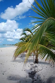Beach in Cozumel | Flickr - Photo Sharing!