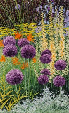Alliums in great composition