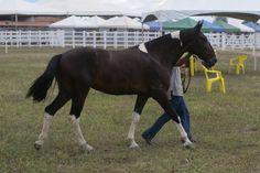 Festa do cavalo foto rodrigo moreira