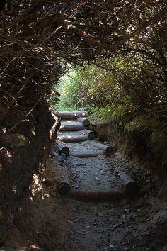 Hobbit Trail - Florence, Oregon. One of my favorite secret places:)