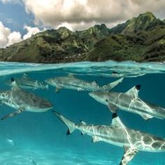 """""""Pristine Seas"""" Photo Assignment -- National Geographic Your Shot"""