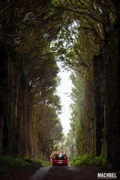 Imperdible una visita al maravilloso Parque Rural de Anaga - Foto de Victor Gomez