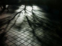 松本裕二(写真家)さんの作品です。
