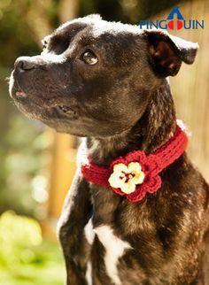 Crochet a pretty collar for you dog for Halloween...isn'ttbis cute?!! :). :)