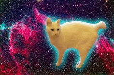 #cat meow nyan #space