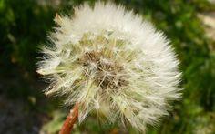 Fondos De Flores Para Regalar Para Escritorio En Hd 8 En HD Gratis