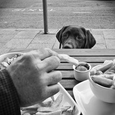 """""""Feed Me..."""" ---- [*Brusky* - a Chocolate Labrador]~[Photograph by Louis Kwong Jr. - March 18 2012]'h4d'121204"""