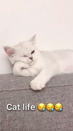 When you are alone at home on weekends 😪😪😪 - Katzen - animals Cute Baby Cats, Cute Little Animals, Cute Cats And Kittens, Cute Funny Animals, Kittens Cutest, Funny Cute, Cute Dogs, Funny Animal Memes, Funny Cat Videos