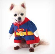 슈퍼맨 강아지 옷 :^)