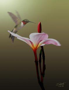 Frangipani Flower and Hummingbird