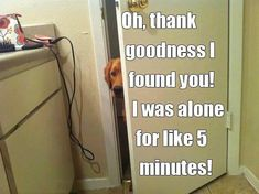 This is SO my Golden and SO true!