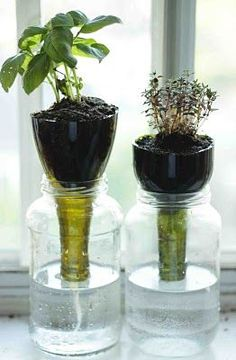 great idea  fill Mason jar with water use wine bottle cut off bottom  run string down neck of wine bottle to wick water.  Takes a few days before wicking kicks in. Great for herbs in the kitchen window.