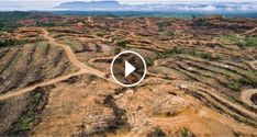 Shocking new video exposes PepsiCo's ties to deforestation in the Leuser Ecosystem