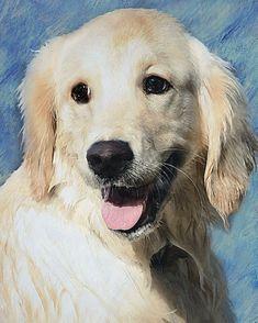 Custom Dog Portrait Golden Retriever by verybestdog on Etsy, $70.00