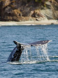 USE COUPON CODE VISITWW12 WHEN BOOKING ONLINE FOR 50% OFF WHALE WATCHING DISCOUNT!
