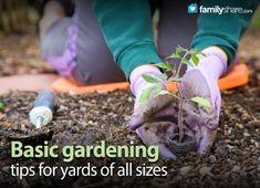 Basic Gardening tips for yards of all sizes #gardening #spring #plants #familyshare #plantingtips