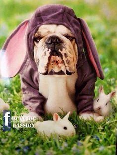 Easter Bully More