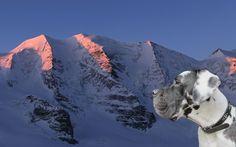 Im Engadin mit Logan Logan, Mount Everest, Mountains, Nature, Travel, Thanks, You're Welcome, Naturaleza, Trips