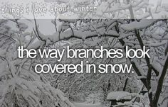 things i love about winter - the way branches look covered in snow