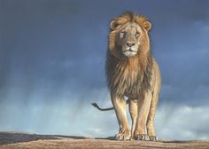 'Rainmaker' Painting of a lion in pastel by wildlife Artist Eric Wilson.
