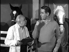 Mr.ED the talking horse