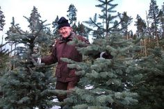 Rich Russians Willing to Pay 350 US Dollars for Norwegian Christmas Trees
